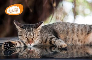 tiger-cat-sleep-on-car-at-tamsui-old-street-riverside